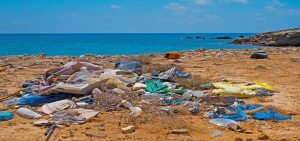 Ecocoast and Bolina contribute to International Coastal Cleanup Day